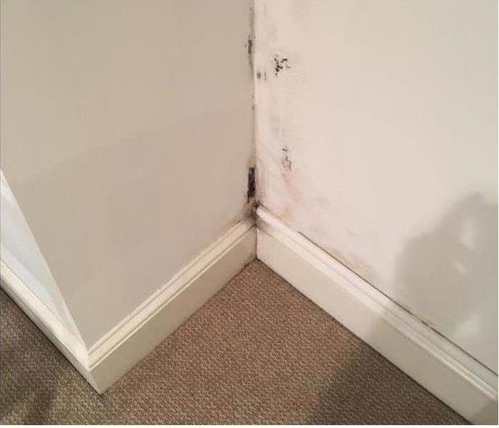 Mold in Corners