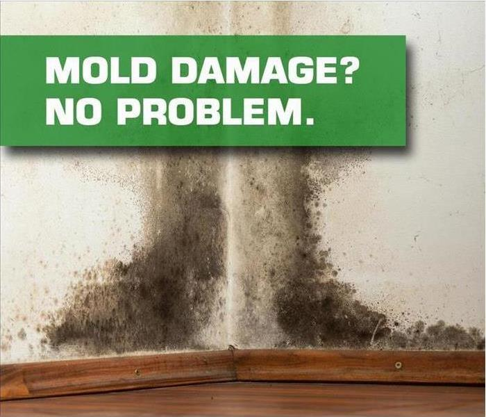 Mold Remediation How to Prevent Mold After Flooding