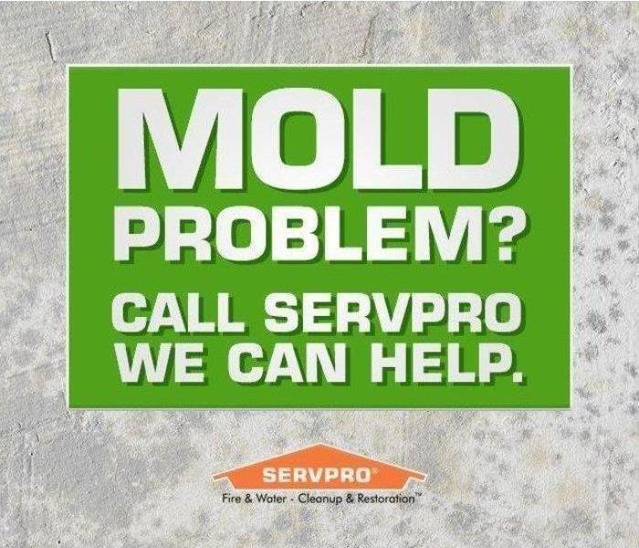 Picture of Mold Growth